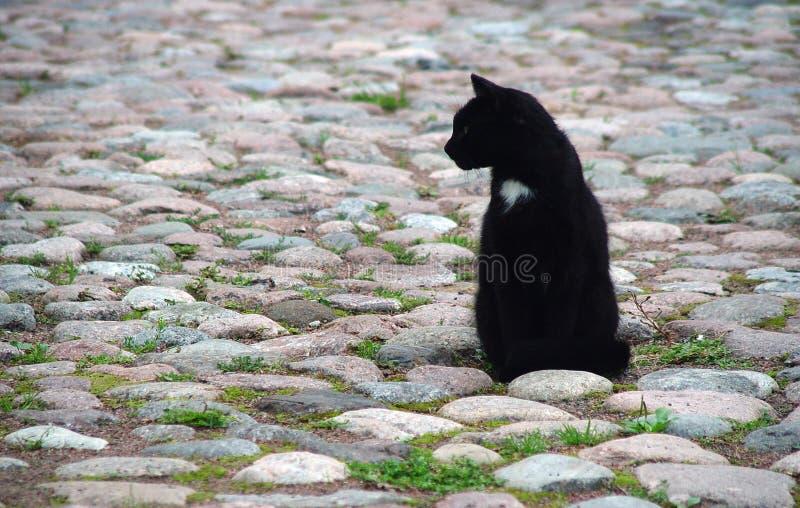 City cat royalty free stock image