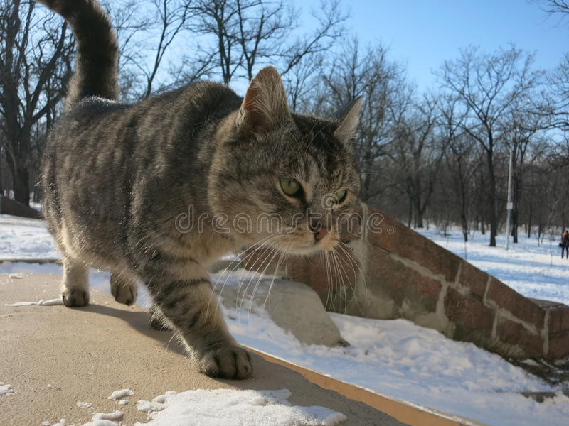 City cats stock images