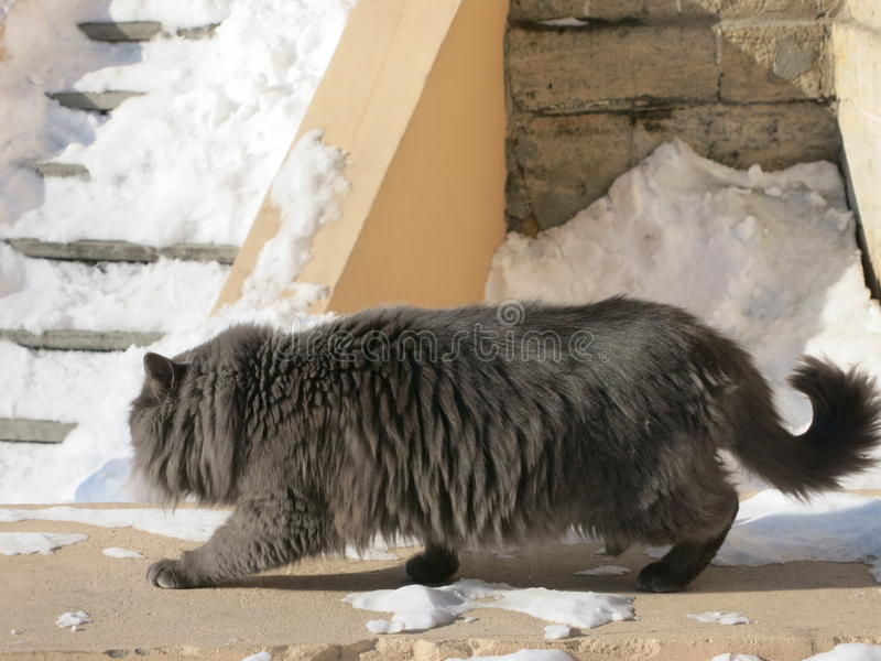 City cats stock photography