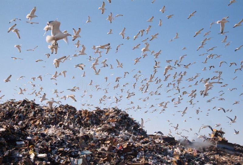 Download City dump stock image. Image of rubbish, heap, scrap, scavenging - 94313