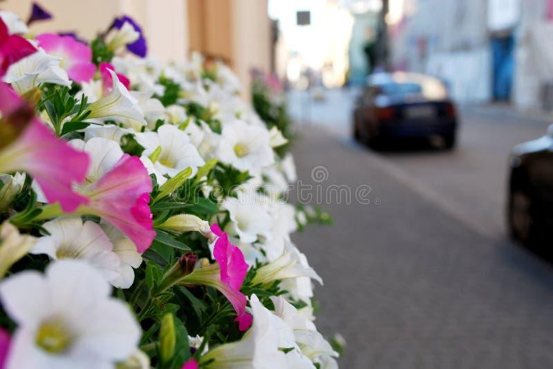 City Flowers stock image