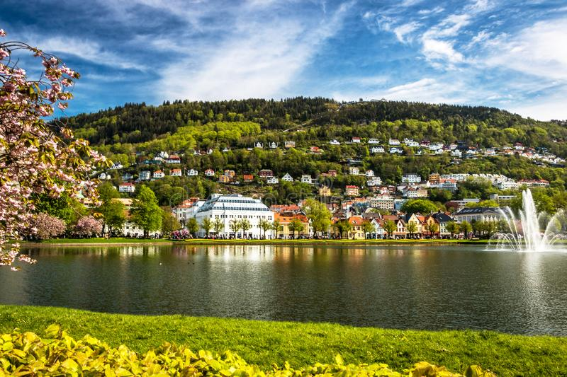 City Landscape with A Tranquil Lake, Green Grass and Mountain, Cherry Blossoms in Spring Sunlight stock photos