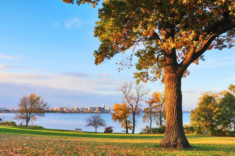 Autumn in a city. City of Madison downtown skyline with state capitol building dome from Olin city park across the Monona lake with autumn colored trees and stock photos