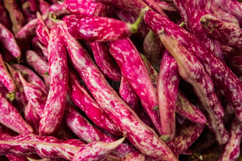Fresh cranberry beans at the market. stock image