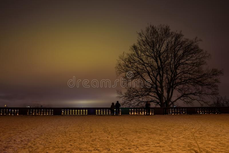 City night tree fog pair. A large tree and the contours of people admiring the panorama of the night city on the viewing platform against the background of a royalty free stock photo