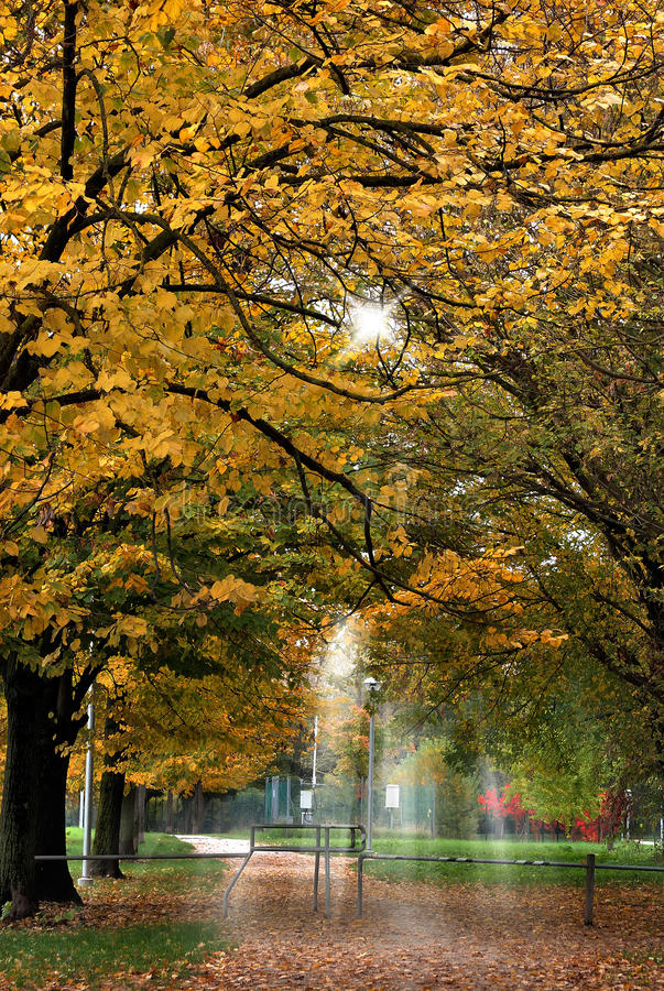 Download City park in autumn stock image. Image of scenic, green - 28716979
