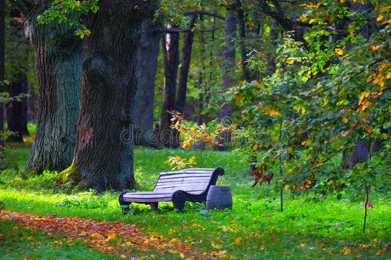 City Park Bench And Empty Avenue The Romantic Nature For Walk
