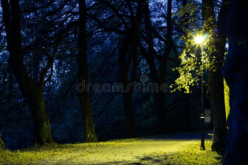 City park in the night scenery with a place to rest. Landscape of night city park in the spring. Benches, paths and lights. royalty free stock image