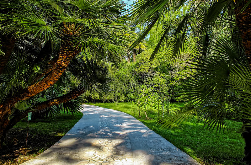 City park path through palm trees. City garden park path through palm trees royalty free stock images