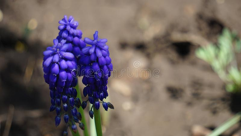 Spring flowers in the city park royalty free stock photography
