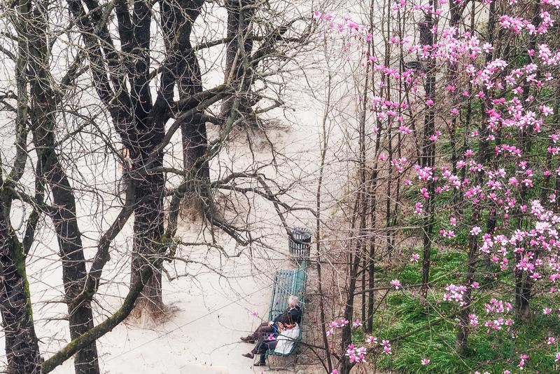 Cremona city springtime stock photography