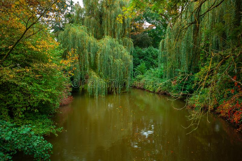 City park, trees reflection on the pond water, autumn. Eindhoven, Netherlands. Landscape stock image