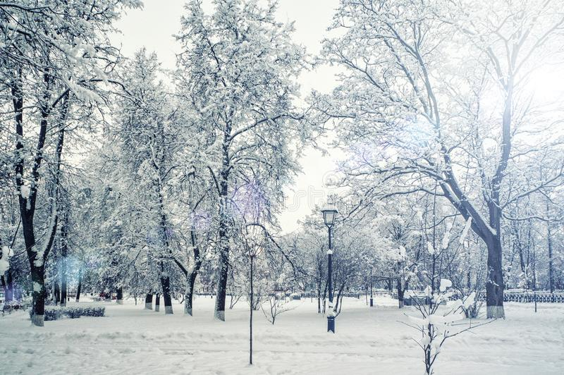 City Park in winter during snowfall. Seasonal phenomenon. Winter snow background.  stock photo