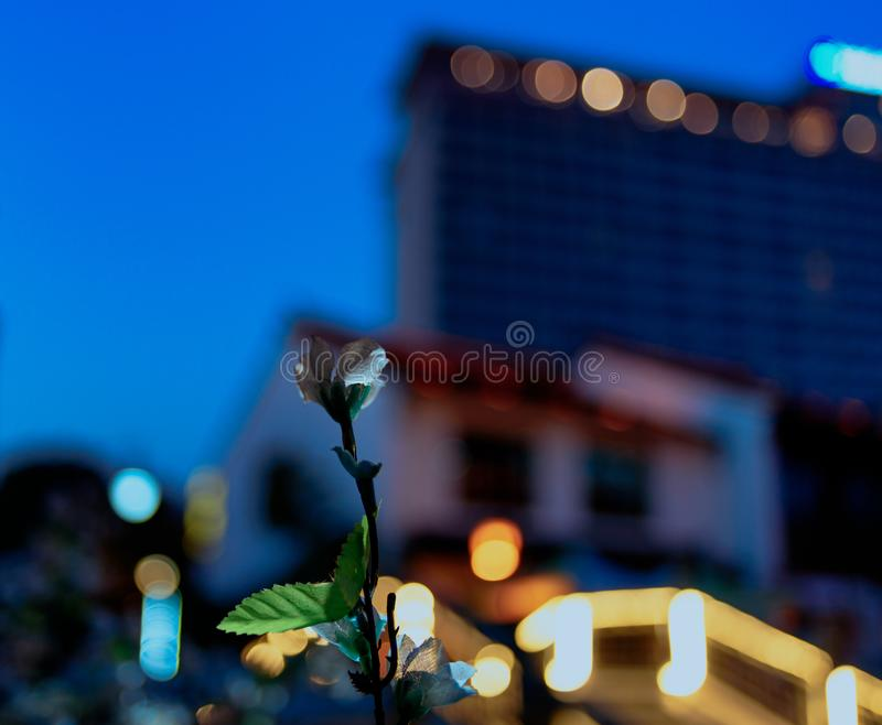 City Plastic flower. A lonely and sad plastic flower alone in the big city night stock image
