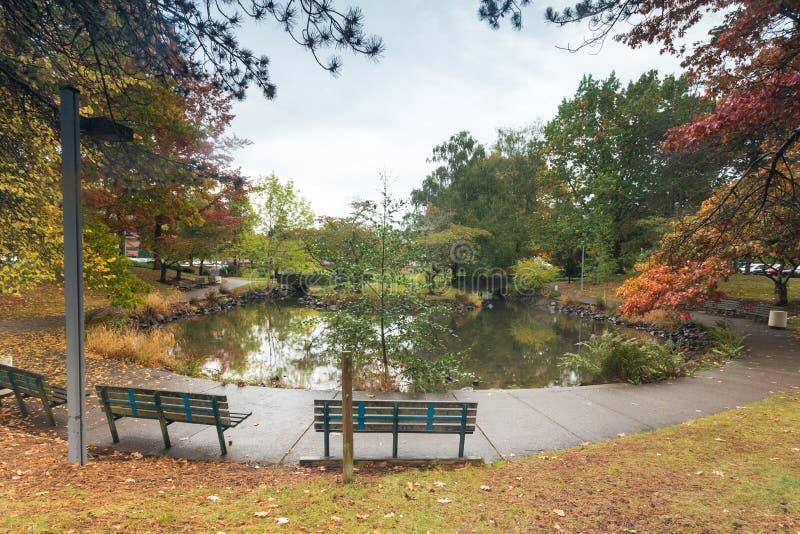 City pond at fall season royalty free stock photography