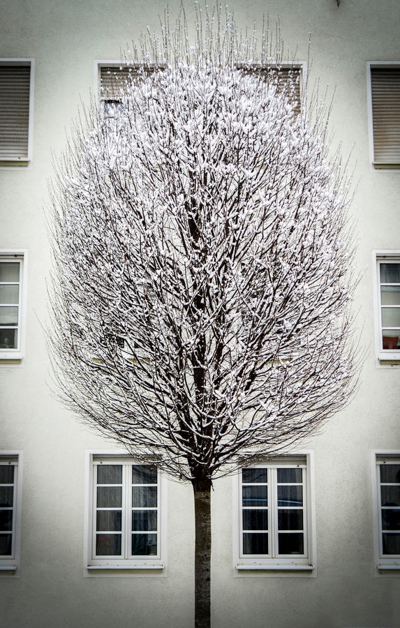 Download City Snow Tree stock image. Image of building, falling - 34771793