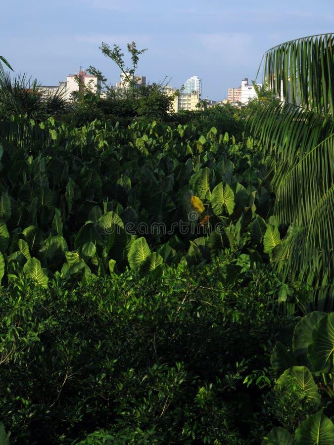 City in vegetation