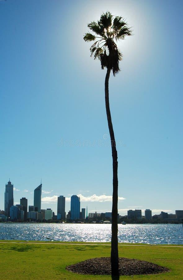 cityline drapacza chmur palm rzeka drzewo obraz stock