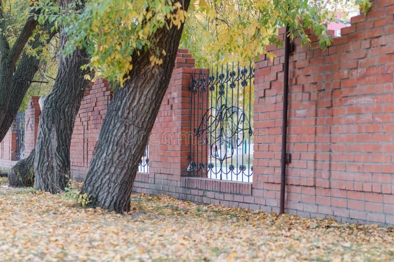 Cityscape De bomen groeien in de stad Stadsstegen met bomen royalty-vrije stock fotografie