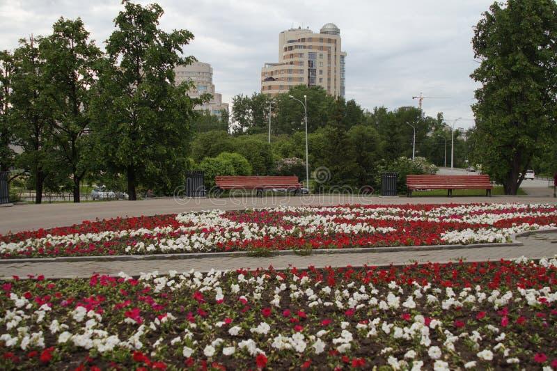 cityscape Gasse im Park auf Tolmacheva-Straße in Jekaterinburg flowerbed petunie lizenzfreie stockfotos