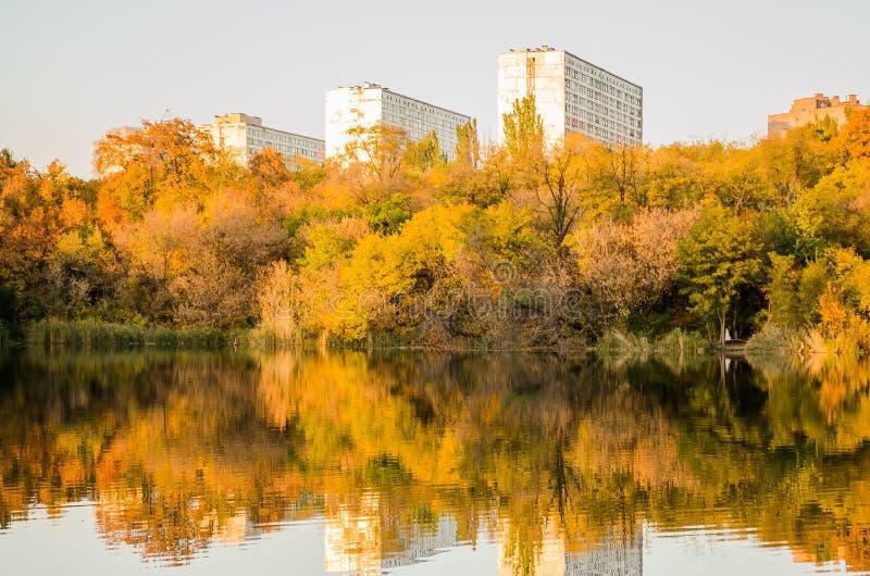 cityscape hastigheter Träd Bereg damm vass Hösten landskap arkivfoton