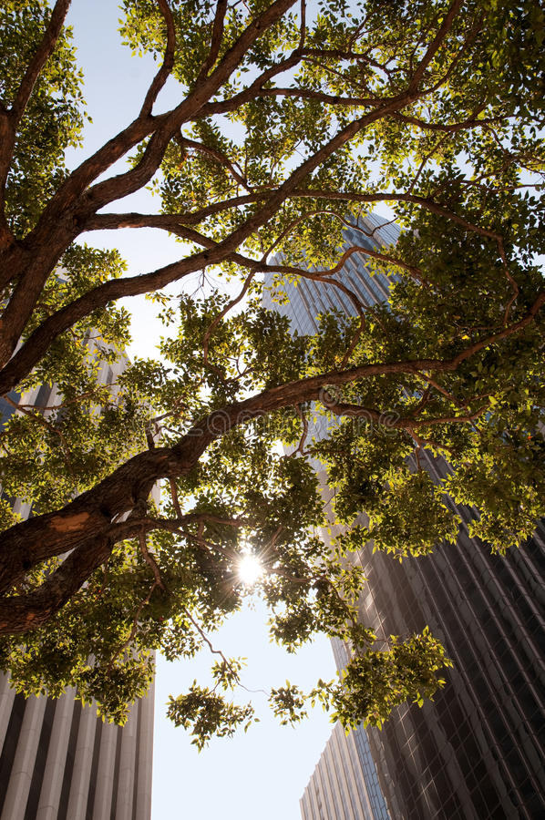 Cityscape with a tree royalty free stock photo
