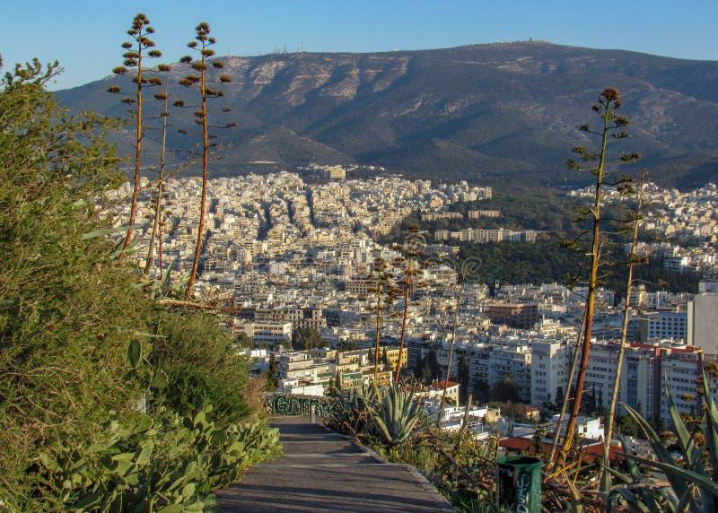 Cityscape van Athene met witte gebouwenarchitectuur, berg, aloë en blauwe hemel stock foto's
