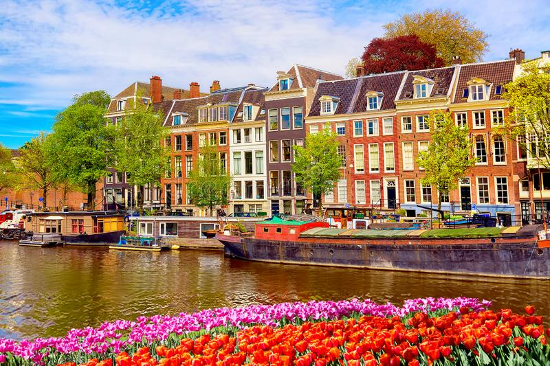 Cityscape view of the canal of Amsterdam in summer with a blue sky and traditional old houses. Colorful spring tulips flowerbed on royalty free stock photos