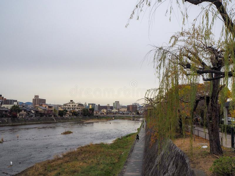 Cityscape view with tree in autumn along Kamogawa river on cloudy sky stock image