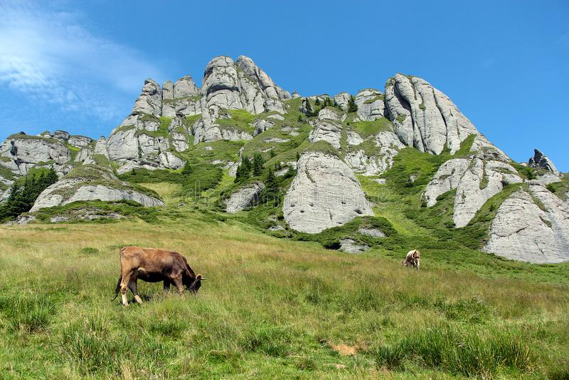 Ciucas berg i romania fotografering för bildbyråer