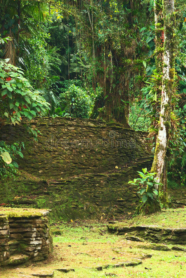 Ciudad Perdida (Lost City) in Northern Colombia. Old stone stairs and terraces among lush vegetation in Ciudad Perdida (Lost City), built by the people of stock image