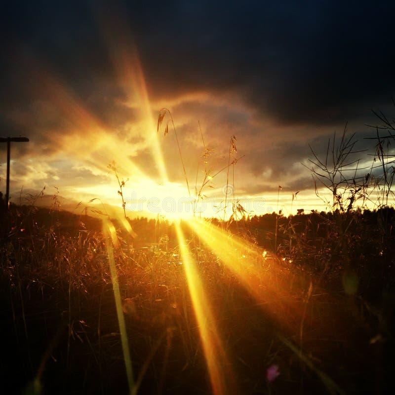Ciudad urbana de los árboles de la puesta del sol del cielo fotografía de archivo