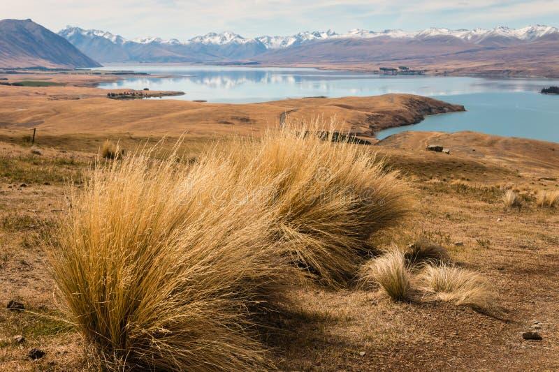 Ciuffo d'erba che cresce sopra il lago Tekapo fotografia stock libera da diritti
