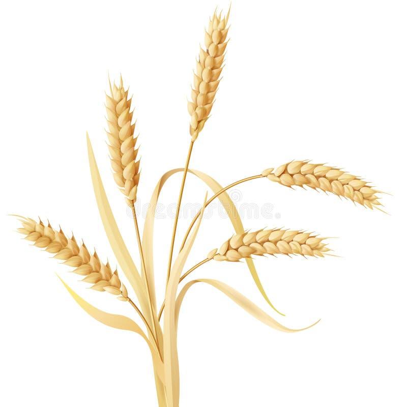 Ciuffo delle orecchie del grano royalty illustrazione gratis