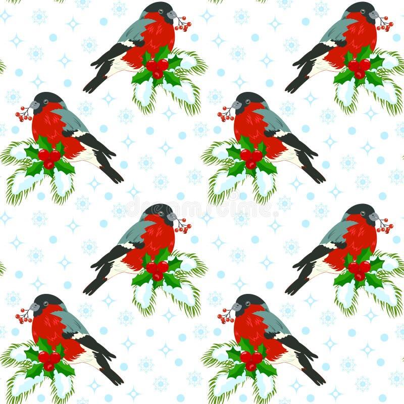 Ciuffolotto su un abete rosso branchBasic fotografia stock