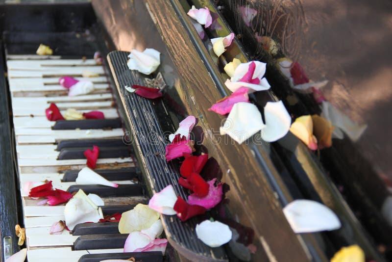 Clés et pétales de piano image stock