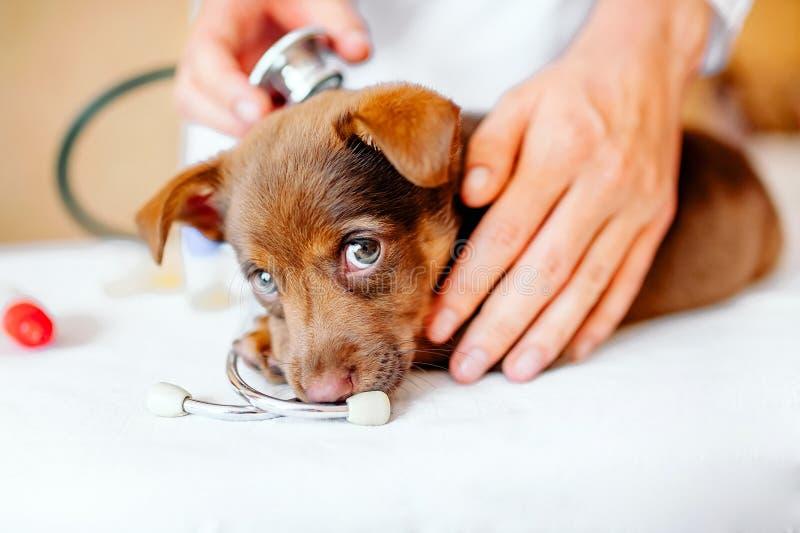 Cl?nica veterinaria fotos de archivo libres de regalías
