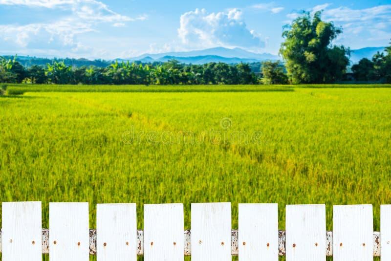 Clôture blanche et beau paysage de gisement de riz photos stock
