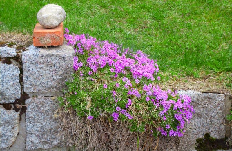 Clôture en pierre envahie avec des fleurs photo libre de droits