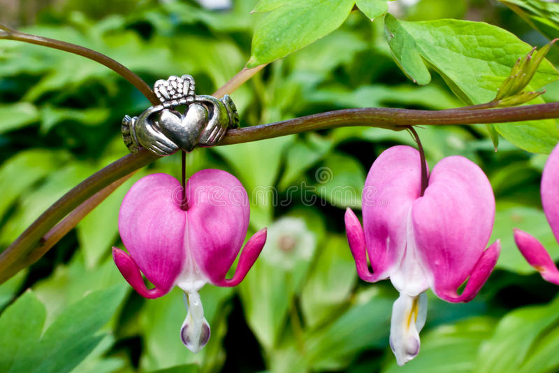 Claddagh Ring. A Claddagh Ring and Bleeding Hearts stock images
