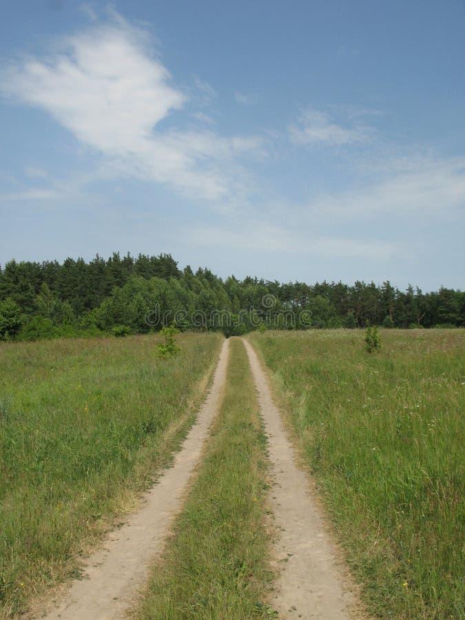 Clairière accidentée verte d'été image libre de droits