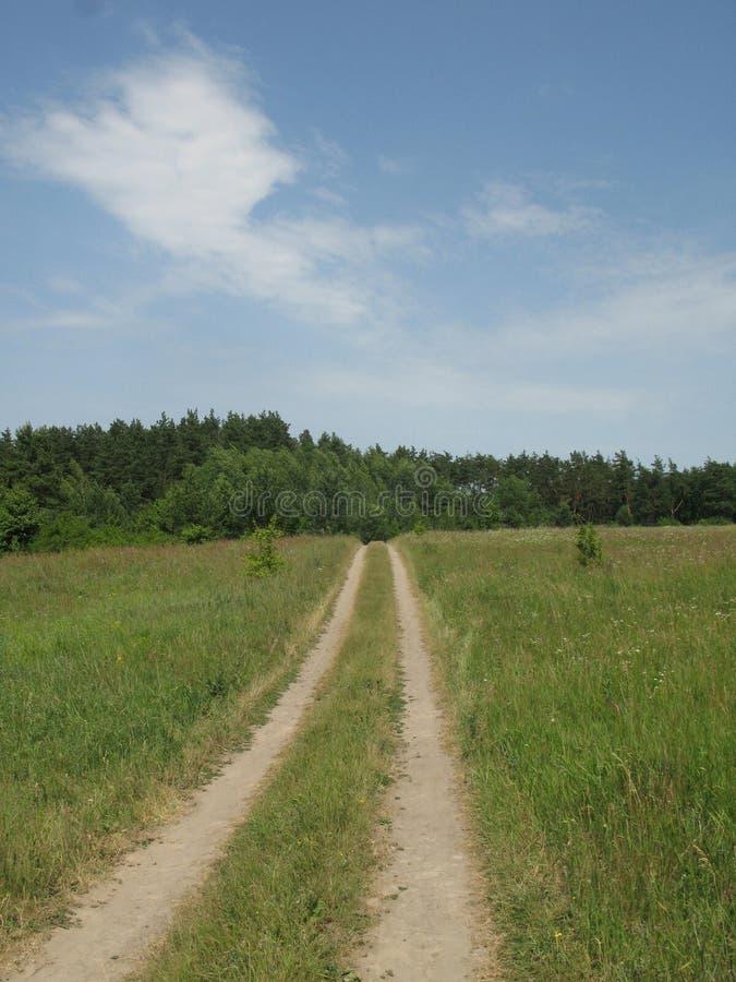 Clairière accidentée verte d'été images libres de droits