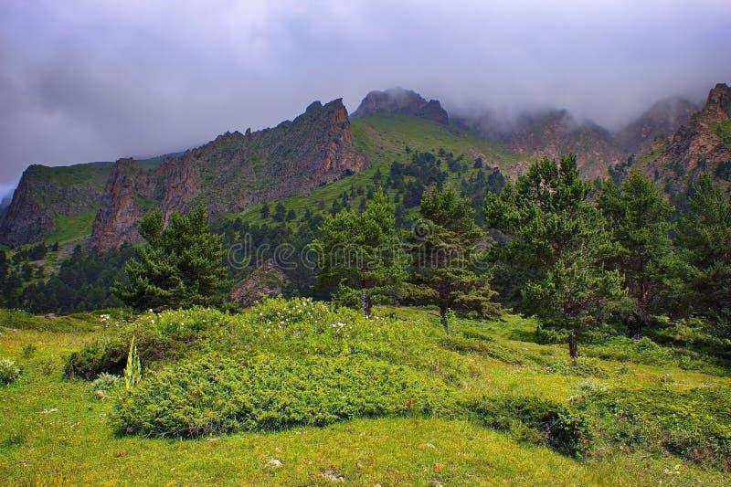 Clairière alpine de pré dans la perspective d'arête de montagne, photo libre de droits