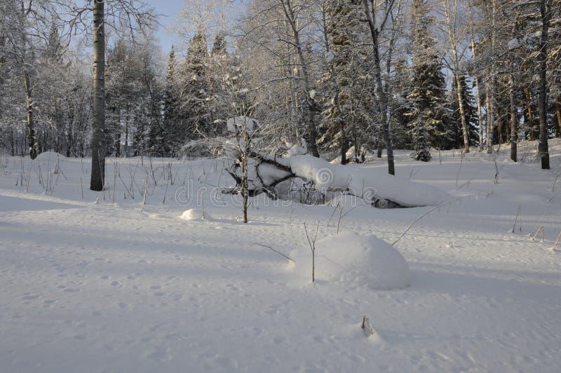 clairière couverte de neige de forêt photo stock
