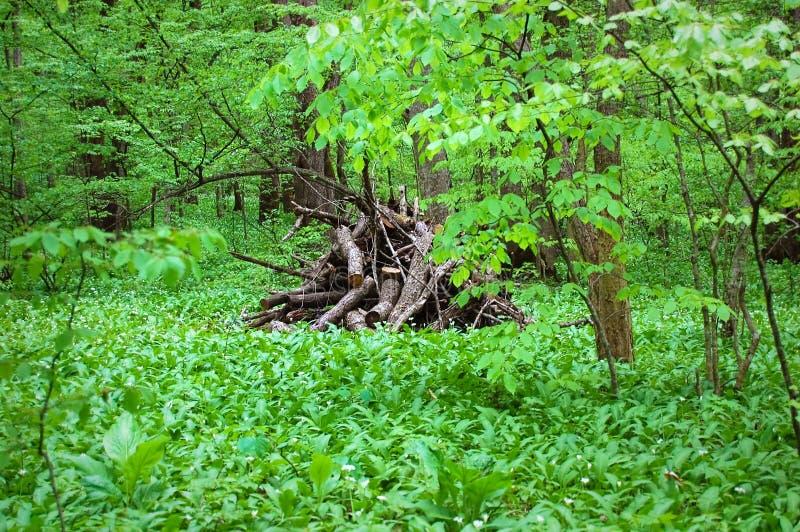 Clairière de forêt image stock