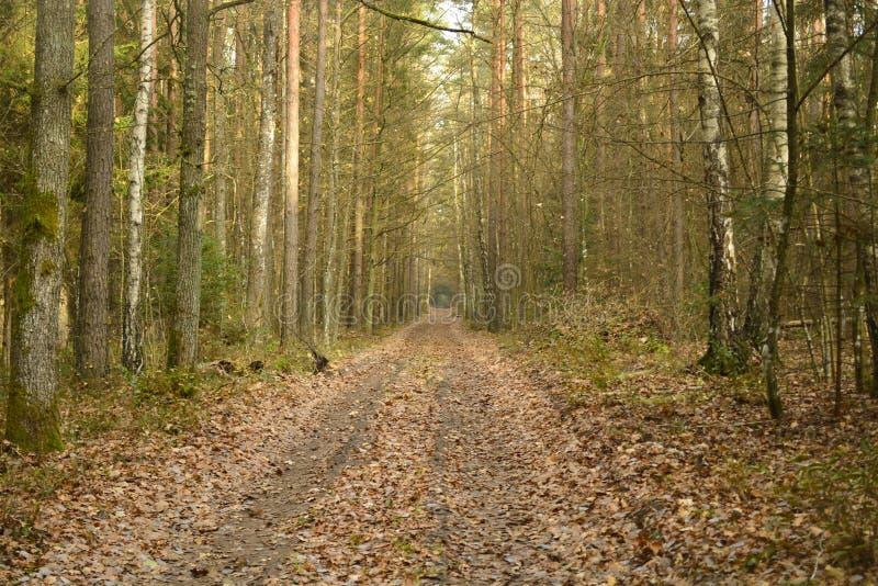 Clairière de forêt Bialowieza Forest Reserve Le village de Kamenyuki belarus photos stock