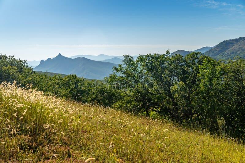 Clairière de forêt dans les montagnes criméennes images stock