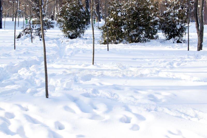 Clairière de neige en parc avec des traces des personnes images stock
