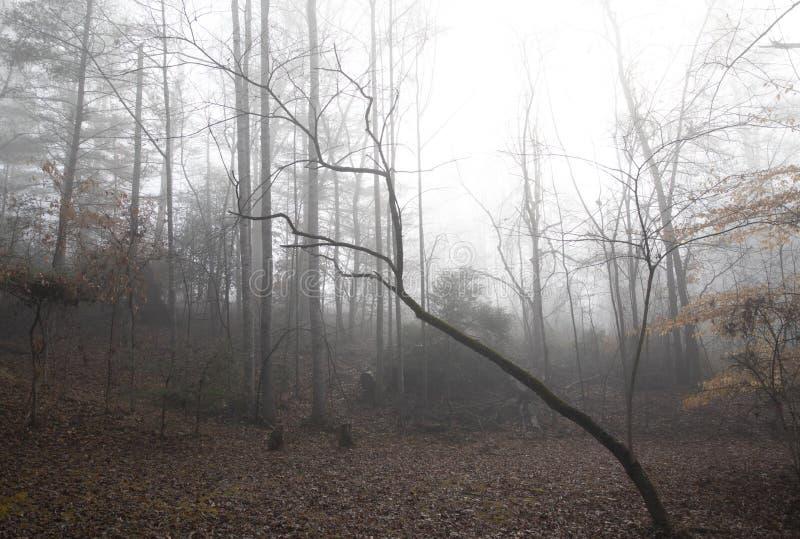 Clairière rurale de région boisée un matin brumeux d'hiver image stock