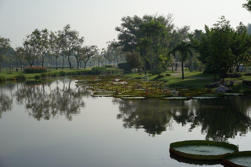 Clam monring的湖 图库摄影
